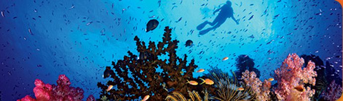 Sportif Dive - diving holidays worldwide