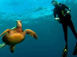 Lanzarote Scuba Dive Holiday