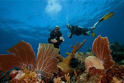 Bonaire Diving Holiday