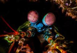 Scuba diving holiday - Puerta Galera, Philippines.