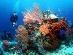 'Singles Weeks' for solo divers in Bali