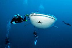 Thailand Dive Centre