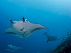 Gan Island Dive Centre NEW
