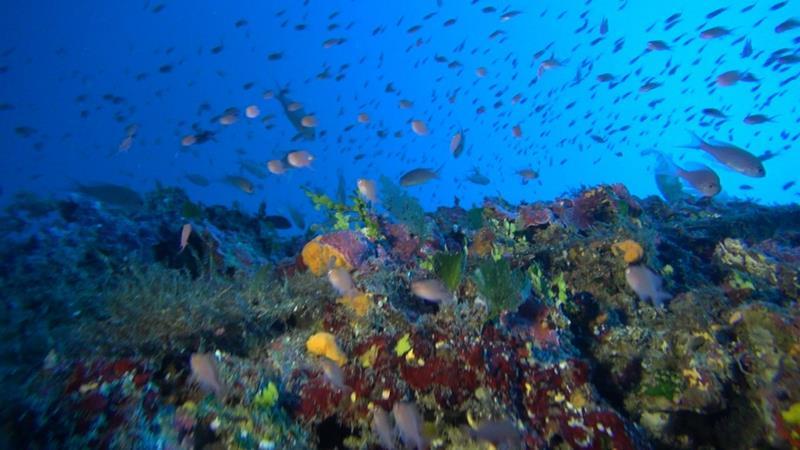Gozo dive centre xlendi bay gozo sportif dive holidays for Gozo dive centres