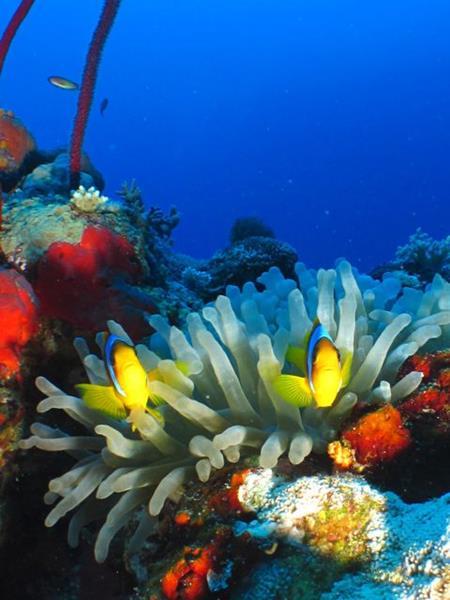 Marsa Alam Dive Centre Red Sea