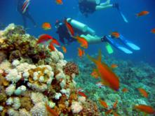 Red Sea Dive Holiday