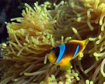Marsa Alam Diving Holiday