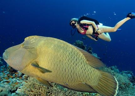 Sharm El Sheikh Scuba Diving Holidays With Sportif Dive Holidays