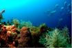 Sharm El Sheikh Diving Holiday