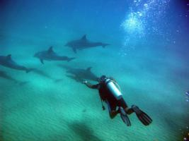 Diver with Dolphins