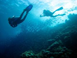 El Quseir scuba diving holiday - Red Sea