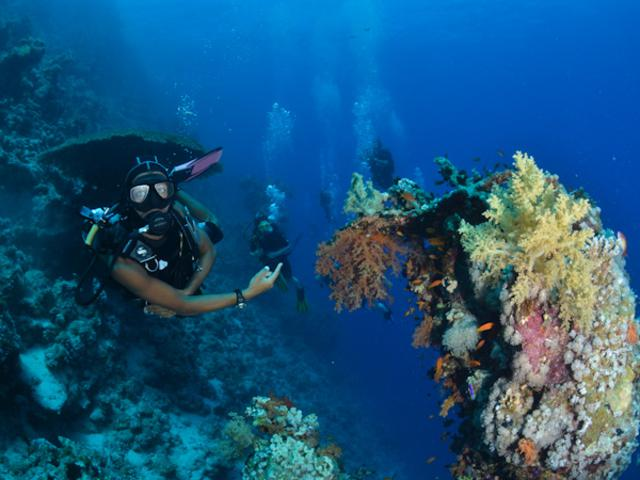 Sharm el sheikh scuba diving holidays with sportif dive - Camel dive hotel ...