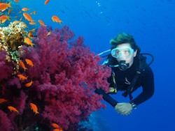 Sharm El Sheik Dive Offer