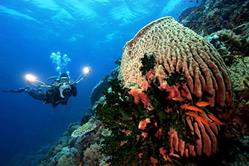Philippines Scuba Diving Holiday. Underwater Photography.