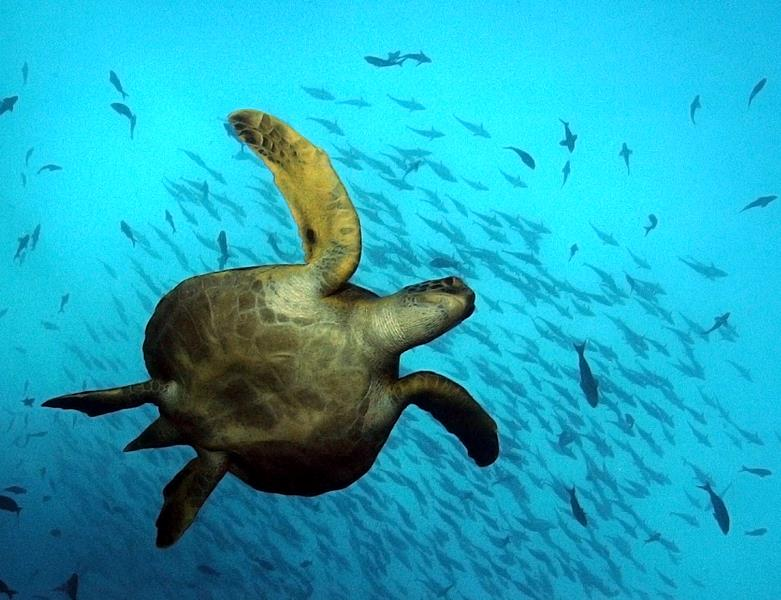Galapagos Islands Scuba Diving Holidays With Sportif Dive