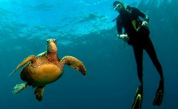 New Lanzarote Dive Centre in Costa Teguise