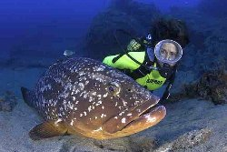 Lanzarote Scuba Diving Holiday - Costa Teguise. Grouper.