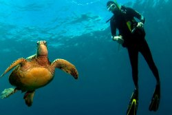 Lanzarote Scuba Diving Holiday - Costa Teguise. Turtle.