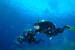 Palau Scuba Diving Holiday. Drift Diving Using Reef Hooks.