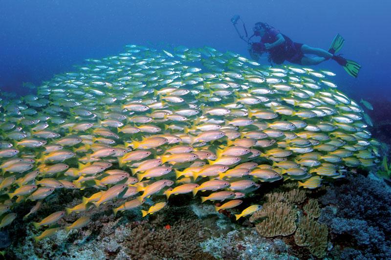 Diving around Zanzibar with Divine Diving dive center in ...