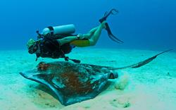 Turks & Caicos Diving Holiday - credit Turks & Caicos Tourist Board
