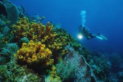 Tobago - Caribbean. Speyside.