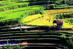 Scuba Diving Holiday, Bali - Indonesia. Rice fields.