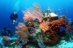 Scuba Diving Holiday, Bali - Indonesia. Reef.