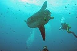 Scuba Diving Holiday, Bali - Indonesia.