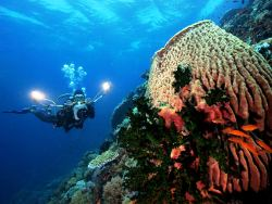 NEW Atlantis Dive Resort & Liveaboard Philippines