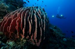 Scuba diving holiday - Puerta Galera, Philippines.
