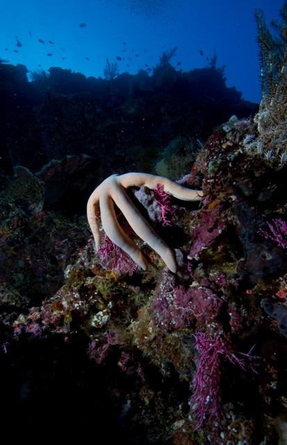Tasik Divers Manado