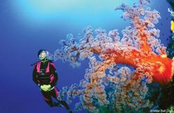 Diving the Coral Sea, Australia