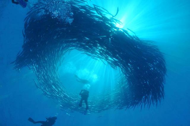 Sportif dive diving holidays liveaboards egypt caribbean - Sipadan dive sites ...