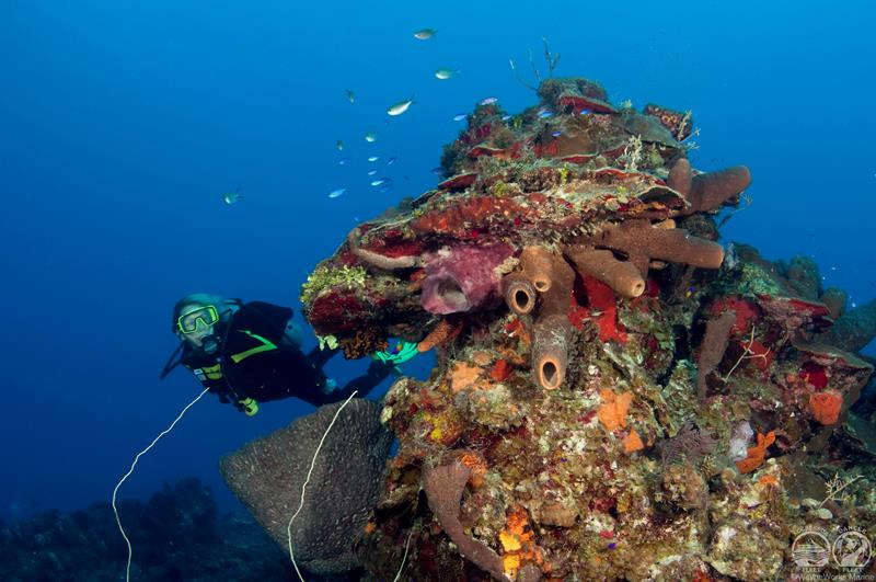 Turks And Caicos Scuba Diving Holidays With Sportif Dive
